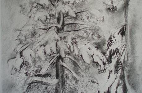 A pinetree 2010
