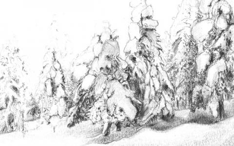 Snowy forest III 2013
